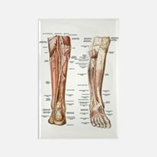 Anatomy of the Feet Rectangle Magnet