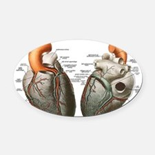 Anatomy of the Human Heart Oval Car Magnet