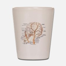 Circulation in the Skull Shot Glass