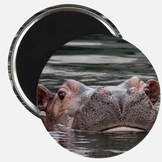 Hippo002 Magnet