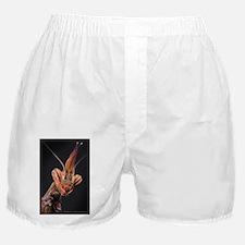 Visage Boxer Shorts