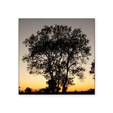 "Tree silhouette  Square Sticker 3"" x 3"""