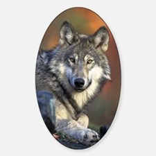 Gray Wolf Oval Bumper Stickers