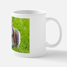 Cute Squirrel Mugs