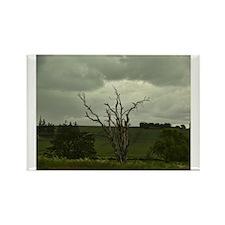 Bare tree Rectangle Magnet