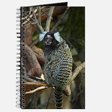 Squirrel Monkey Journal