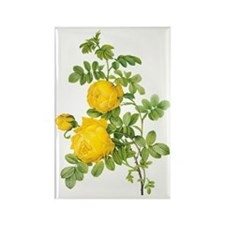 Vintage Yellow Roses by Redoute Rectangle Magnet
