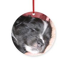 IcelandicSheepdog010 Round Ornament