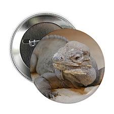 "Iguana004 2.25"" Button"
