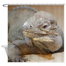Iguana004 Shower Curtain