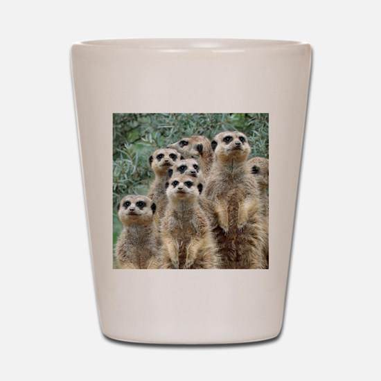 Meerkat012 Shot Glass