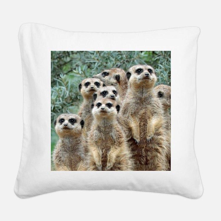 Meerkat012 Square Canvas Pillow