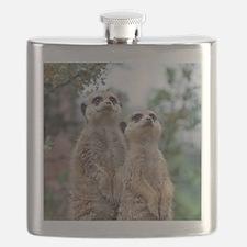 Meerkat013 Flask