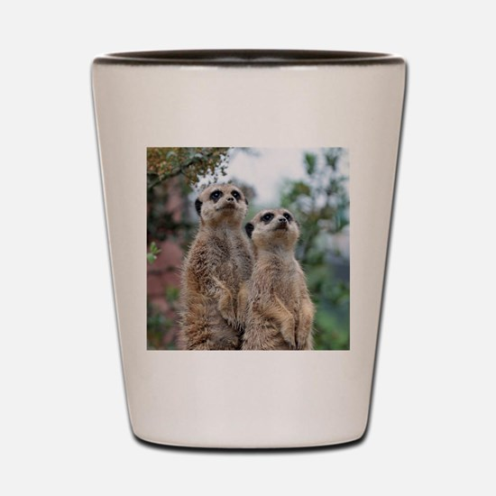 Meerkat013 Shot Glass