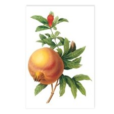 Vintage Pomegranate by Re Postcards (Package of 8)