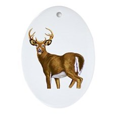 White Tail Deer Buck Ornament (Oval)