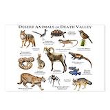 Mojave desert Postcards