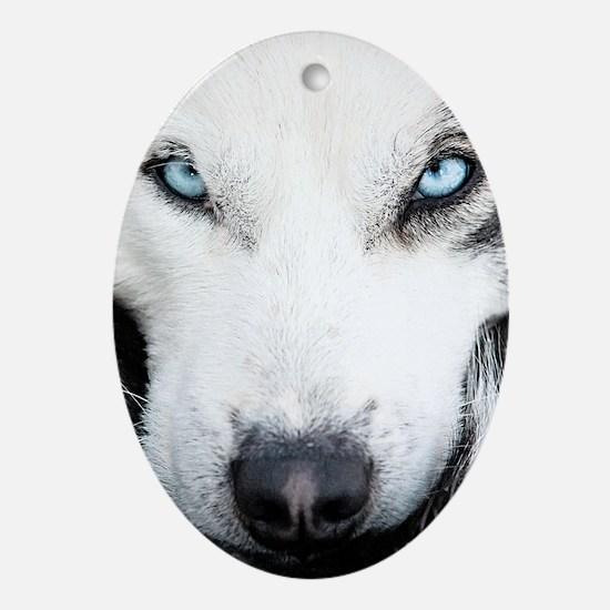 Blue Eyed Husky Oval Ornament