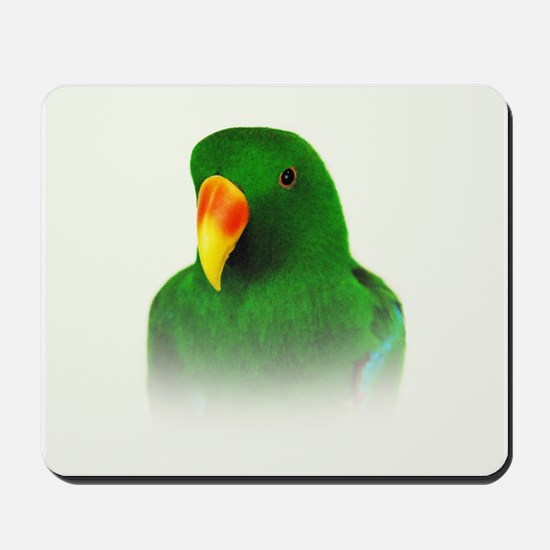 Male Eclectus.jpg Mousepad