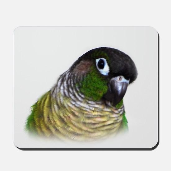 Green Cheek Conure.jpg Mousepad