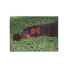 hippopotamus, 5'x7'Area Rug
