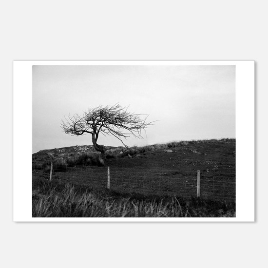 Lonely tree Postcards (Package of 8)