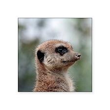 "Meerkat015 Square Sticker 3"" x 3"""
