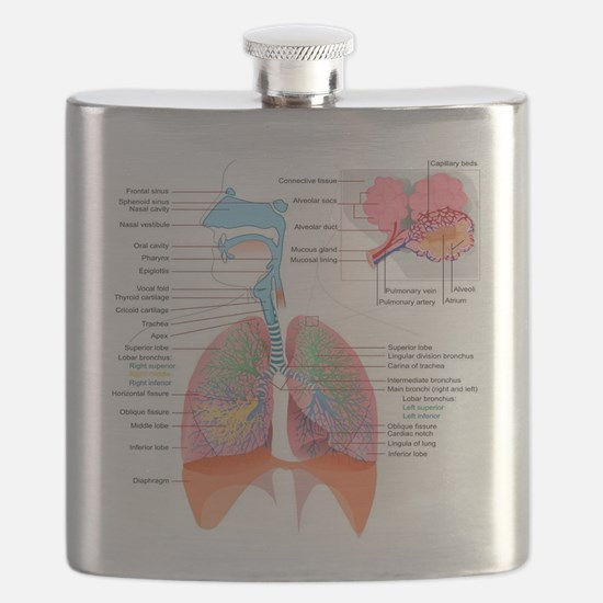 Respiratory system complete Flask