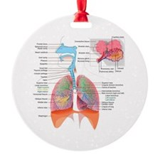 Respiratory system complete Ornament