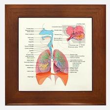 Respiratory system complete Framed Tile