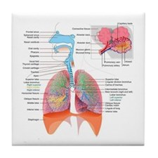 Respiratory system complete Tile Coaster