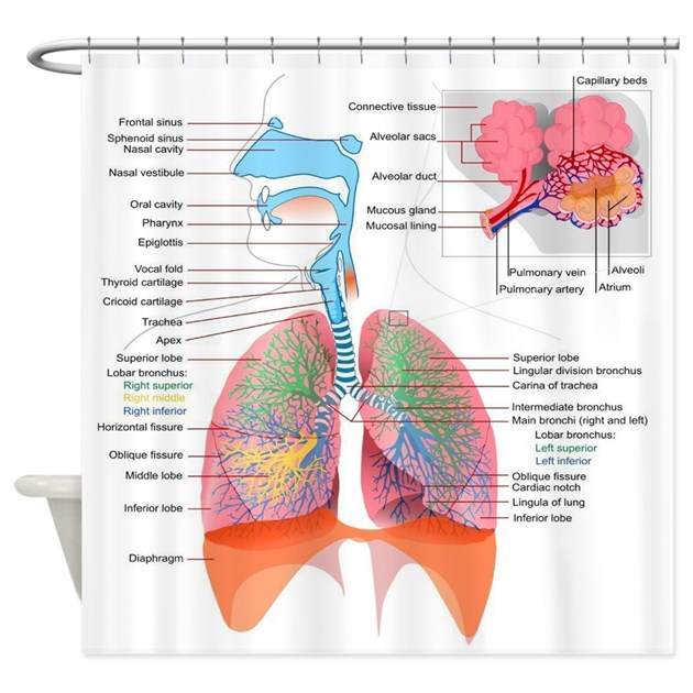 Respiratory System Complete Shower Curtain By Bestsellingts