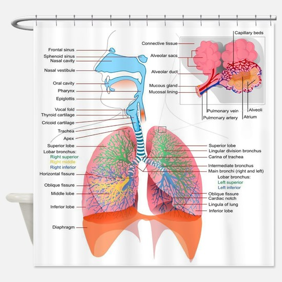 Respiratory system complete Shower Curtain