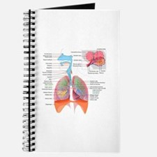 Respiratory system complete Journal