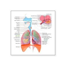 Respiratory system complete Sticker