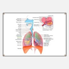 Respiratory system complete Banner
