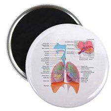 Respiratory system complete Magnets