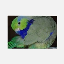 Pacific Parrotlet Rectangle Magnet