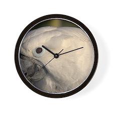umbrella cockatoo Wall Clock