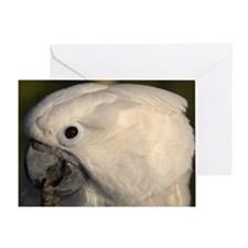 umbrella cockatoo Greeting Card