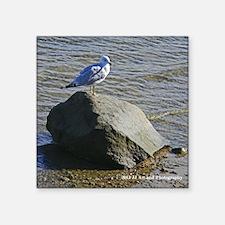 "Plymouth Seagull Square Sticker 3"" x 3"""