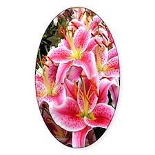 Pink Stargazer Lilies Decal