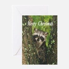 Baby Raccoon Greeting Cards