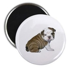English Bulldog Puppy1 Magnet