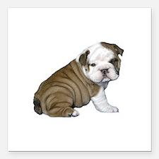 "English Bulldog Puppy1 Square Car Magnet 3"" x 3"""
