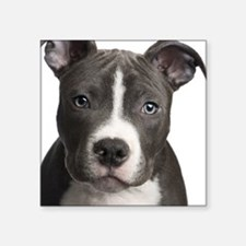 "Pitbull Lovers Square Sticker 3"" x 3"""
