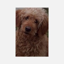 Golden Doodle Rectangle Magnet