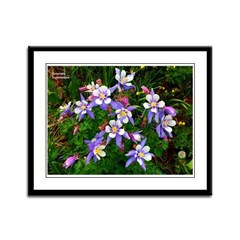 Framed Panel Print: Columbines A8