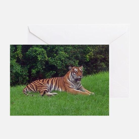 tiger 3 Greeting Cards (Pk of 10)