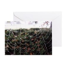 Dew On A Spiderweb Greeting Cards